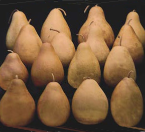 Pear Gourds