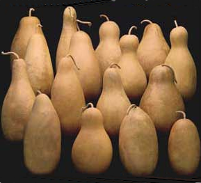 Tall Body Gourds